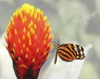 Sweet. A butterfly sitting on a flower royalty free stock photography