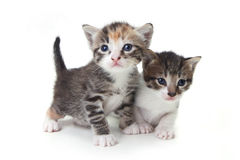 Sweet Adorable Baby Kittens Exploring Their Space Stock Photos