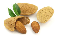 Sweet almond. On a white background stock images