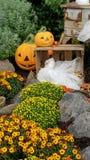 Pumkin in autumn. Pumkin autumn orange season holidays stock image