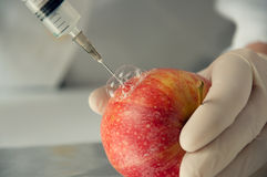 Sweet apple, genetic engineering Royalty Free Stock Image