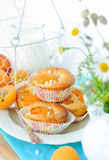 Sweet apricot muffins in сupcakes Royalty Free Stock Photos