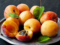 Sweet Apricots Royalty Free Stock Photo