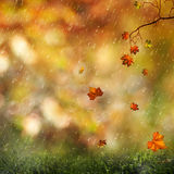 Sweet autumn rain on the meadow Royalty Free Stock Photography