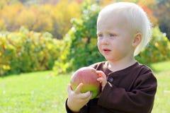 Sweet Baby Boy Holding Apple on Autumn Day Stock Image