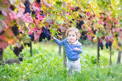 Sweet baby girl playing in autumn vine yard Stock Photography