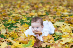 Sweet baby girl playing with yellow maple leaves. In autumn park Royalty Free Stock Image