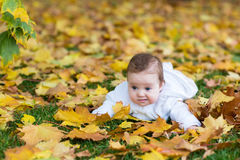 Sweet baby girl playing with yellow maple leaves. In autumn park Stock Photography