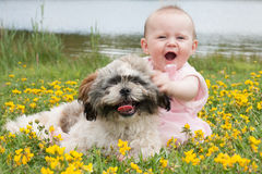 Sweet baby. Girl and puppy in a field of buttercups Stock Image