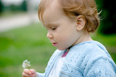 Sweet baby holding dandelion. Pretty child holding a dandelion in arm and looking into it royalty free stock image