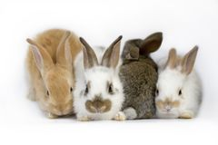 Sweet baby rabbits royalty free stock photo