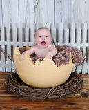 Sweet baby sitting in giant egg Stock Image