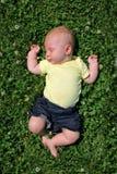 Sweet Baby Sleeping Outside in Clover Field Stock Image