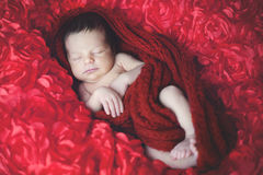 Sweet baby sleeping wrapped into warm cloth and 3d dimension roses. Sleeping baby lying on the piece of cloth full of red roses Royalty Free Stock Photography