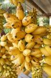 Sweet Banana Stock Photos