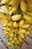 Sweet Banana Royalty Free Stock Photos