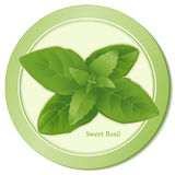 Sweet Basil Icon. Sweet Basil herb is a popular aromatic herb with tasty leaves used as seasoning with salads, soups, meats, fowl, cheese and egg dishes in Royalty Free Stock Images