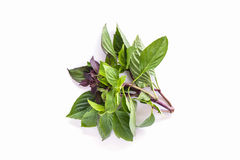 Sweet basil leaves. Royalty Free Stock Photo