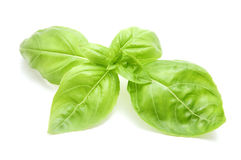 Sweet basil leaves. On a white background Stock Images
