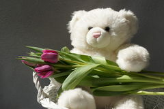 Sweet Bear, pretty tulips. Sweet teddy bear with tulips in his arms Stock Images