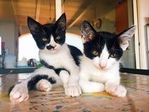 Sweet and beautiful Kittens stock photos