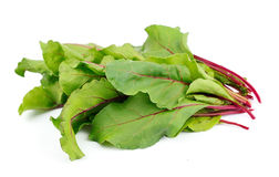 Sweet beet leafs(mangold) Royalty Free Stock Image