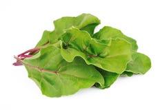 Sweet beet leafs(mangold) Stock Photos