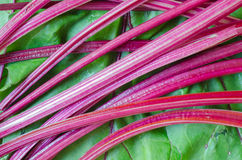 Sweet beet leaves Stock Photography