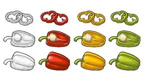 Sweet bell pepper. Vector vintage engraved illustration. Sweet bell red, green, yellow pepper. Vector vintage color and black engraving illustration for menu Stock Photo