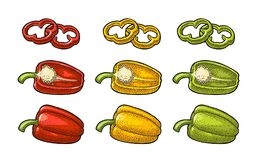 Sweet bell pepper. Vector vintage engraved illustration. Sweet bell red, green, yellow pepper. Vector vintage color engraving illustration for menu, poster Royalty Free Stock Photos
