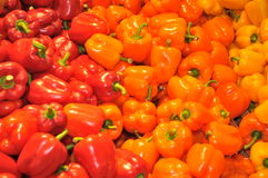 Sweet bell peppers Stock Images