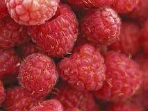 Sweet berries. Red and juicy berries of raspberry Stock Photos
