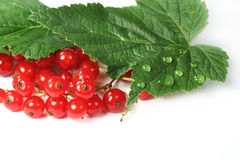 Sweet berries red currant Stock Photo