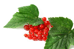 Sweet berries red currant Royalty Free Stock Images