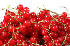 Sweet berries red currant Stock Photography