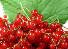 Sweet berries red currant Royalty Free Stock Image