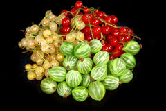 Sweet berries red currant and  gooseberries Stock Photo