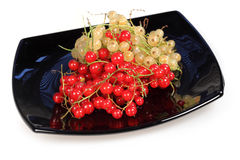 Sweet berries red currant and white currant Royalty Free Stock Photo
