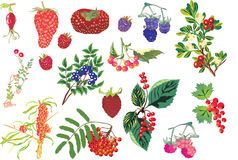 Sweet berry set Stock Photo