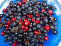Sweet bilberries  close-up. Timber berries Stock Photos