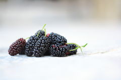 Sweet Black Mulberry Stock Photos