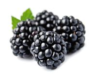 Sweet blackberries isolated. Sweet blackberries on the white background royalty free stock image