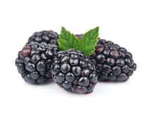 Sweet  blackberry fruit Stock Photography