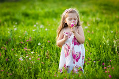 Sweet blonde girl smelling flowers on the meadow Royalty Free Stock Image