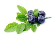 Sweet blueberries Stock Photo
