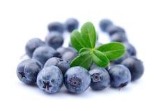 Sweet blueberries Royalty Free Stock Photo