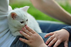 Sweet boy with a white cat Royalty Free Stock Image