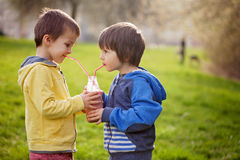 Sweet boys in the park, holding bottle with smoothie, drinking Royalty Free Stock Photo