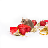 Sweet brown mouse sitting among red and gold Christmas decorations. Royalty Free Stock Photography