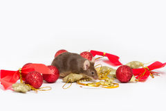Sweet brown mouse sitting among red and gold Christmas decorations. Royalty Free Stock Photos